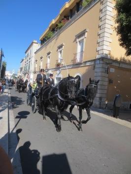Cavalli Murgesi, Noci